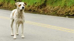 Multado por adelantar a un perro